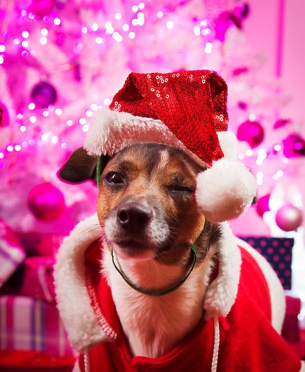 TØNSBERG 2013-12-09: Julereportasje hjemme hos Christine Koht og Pernille Rygg. FOTO: WERNER JUVIK