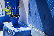 Green plant in a blue pot in the medina of Chefchaouen.