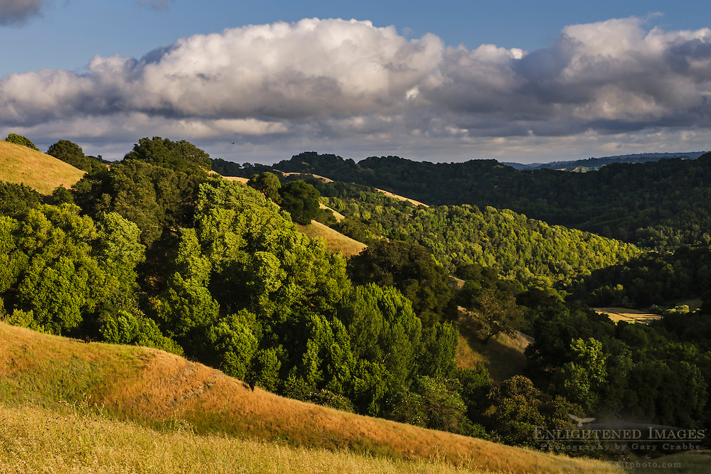 Rolling hills in Spring, Briones Regional Park, Contra Costa County, California