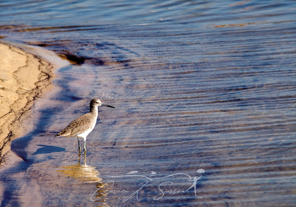 A shorebird walks along the water at the Bayou La Batre State Docks in Bayou La Batre, Ala., Nov. 23, 2012. (Photo by Carmen K. Sisson/Cloudybright)