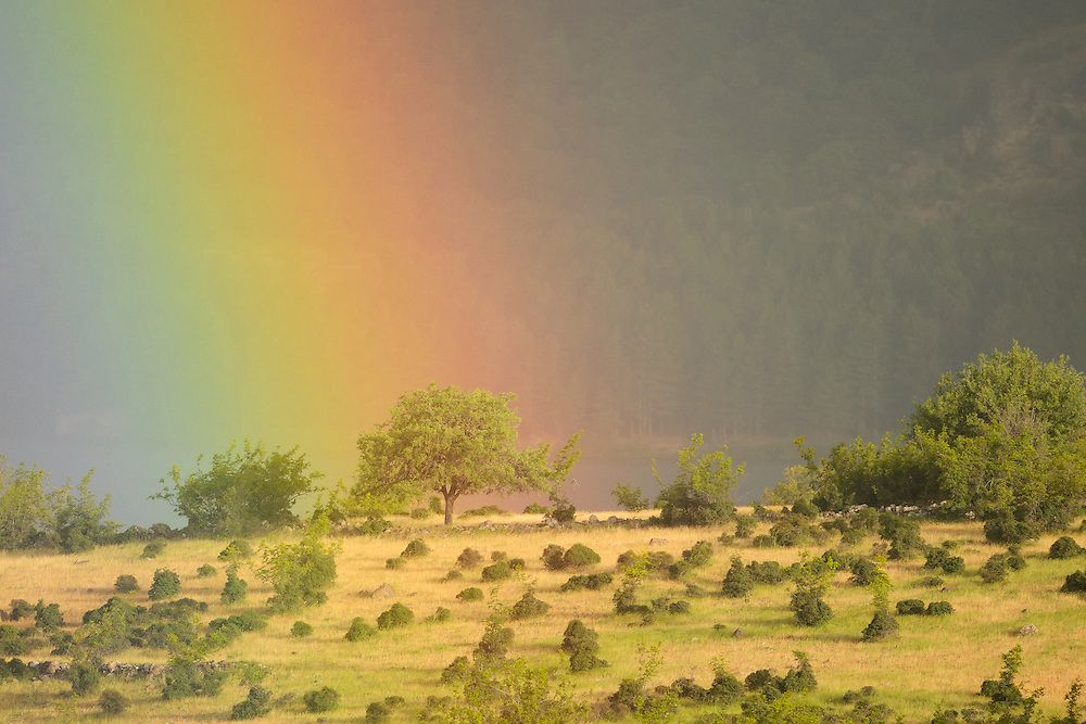 Rainbow on a grazed landscape, grazed by Fallow deer, Dama dama, Studen Kladenets reserve, Eastern Rhodope mountains, Bulgaria
