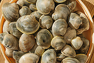 Clams caught in Hallock's Bay, Orient, New York