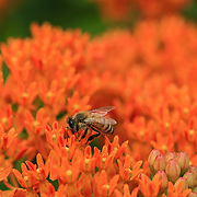 &quot;Drink it Up&quot; <br />
