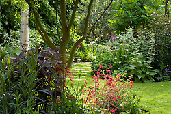 Summer borders with Persicaria  'Red Dragon' and Heuchera 'Fireworks' in the foreground. Stepping stone path in lawn