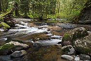 North Fork of Kanaka Creek at Kanaka Creek Regional Park in Maple Ridge, British Columbia, Canada