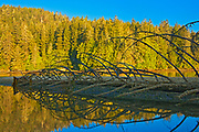 Fallen treeon shoreline  at sunset, Port Renfrew. Vancouver Island, British Columbia, Canada