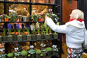Woman visits florist shop and chooses plant near Boulevard Saint Germain, Latin Quarter, Paris, France