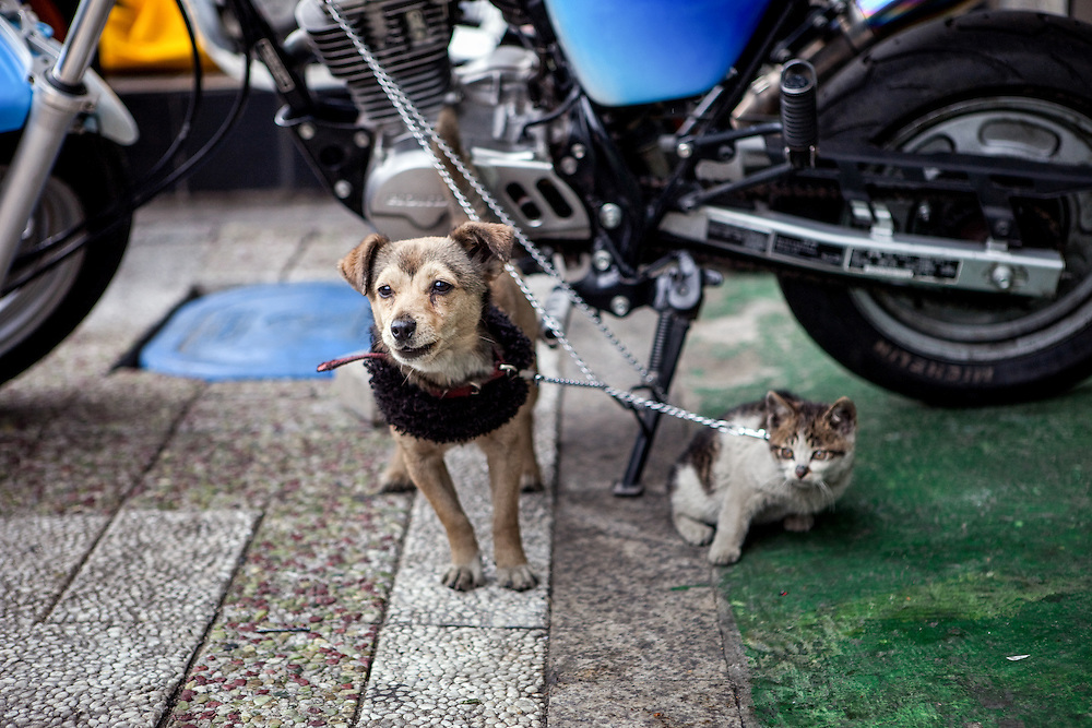 Dog and cat chained to a motorcycle in front of a shop in the center of the Korean metropolis Seoul.