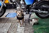 HUNDE_im_WELTALL_(DOGs)