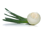 Close up of onion on white background