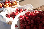 Fresh berries at breakfast, IPNC 2010