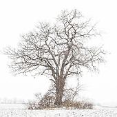 2016 12 December Minnesota Landscape & Trees