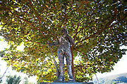 Pitangui_MG, Brasil...Estatua de um bandeirante em Pitangui, Minas Gerais. Ao fundo uma amendoeira (Prunus dulcis)...Bndeirante Statue in Pitangui, Minas Gerais. In the background an almond tree (Prunus dulcis)...Foto: LEO DRUMOND / NITRO