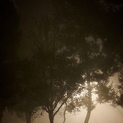 Trees in a suburban park on a foggy night. Irvine, CA.