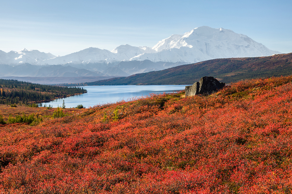 A ridge overlooking Wonder Lake is covered with blueberry bushes with brilliant red leaves and a boulder make for a great foreground to the Alaska Range and Mt. McKinley in Southcentral Alaska on a clear late fall day. Morning.