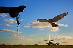 Falcoaria Hayabusa