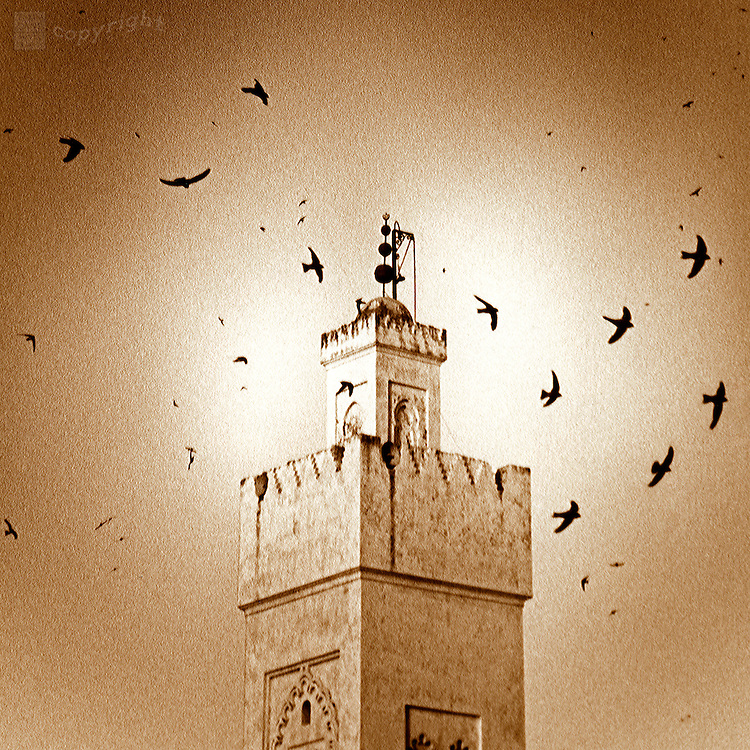 Silhouettes of a flying swallows circle a minaret tower in the medieval city of Fez, Morocco.