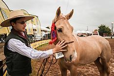 Cuidados com o cavalo