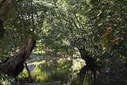Ilm, Tiefurt, Weimar, Thüringen, Deutschland   river Ilm, Tiefurt, Weimar, Thuringia, Germany