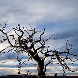 A tree sets against an evening sky at Red Rock State Park near Gallup, New Mexico.