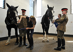 © Licensed to London News Pictures. 02/05/2013. London, UK (left to right) horses Isaiah and Fortune are inspected. The Household Cavalry receive a horse health check at Hyde Park Barracks from pet charity Blue Cross in order to encourage horse owners to take part in the National Equine Health Survey (NEHS). Photo credit : Stephen Simpson/LNP