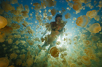 Millions of Mastigias sp. jellies follow the sun in Jellyfish Lake, Palau. With snorkeler.