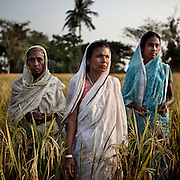 Sudhanya Khali, Unesco reserve in the Sundarban with more than 100 islands,home to the largest mangrove forest in the world..Seba Midya, Gouri Mondal, Bhima sundal. Tiger widows, 9 December 2010...