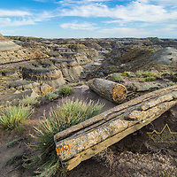 ancient petrified logs in the badlands of eastern montana near fort peck lake day arm