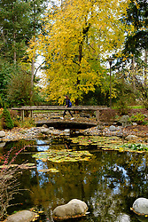 Fall color and the pond on lower campus at PLU, Tuesday, Oct. 18, 2016. (Photo: John Froschauer/PLU)