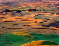Wheatfields in the Palouse Region of Washington USA