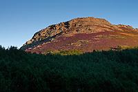 Heather in rocky landscape/Parc naturel regional du Haut-Languedoc/Caroux