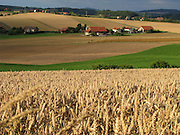 Wünnewil: champs de blé au bord de l'autoroute près de Wünnewil. Le paysage du district de la Singine demeure fortement marqué par l'agriculture. Getreidefelder bei Wünnewil. Die Landschaft der Gemeinde im unteren Sensebezirk des Kantons Freiburg ist immer noch stark von der Landwirtschaft geprägte. © Romano P. Riedo