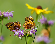 BUTTERFLYS AND WILDFLOWERS
