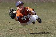 Middletown, New York - An Orange County Community College outfielder dives for the ball in a junior college baseball game on April 2, 2011.
