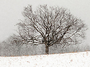 One of two trees in a farmer's field  along Chalk Lake Road close to Skyloft Ski Club in Durham Region.  These cought caught my interest during a snowfall and were taken with a 300 mm telephoto lens (equivalent 480 mm)