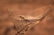 Communal spider and web