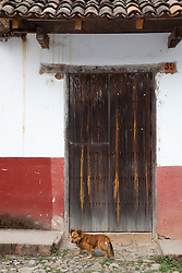 """Dog and Door"" - This dog and old wooden door were photographed in the small mountain town of San Sebastian, Mexico."