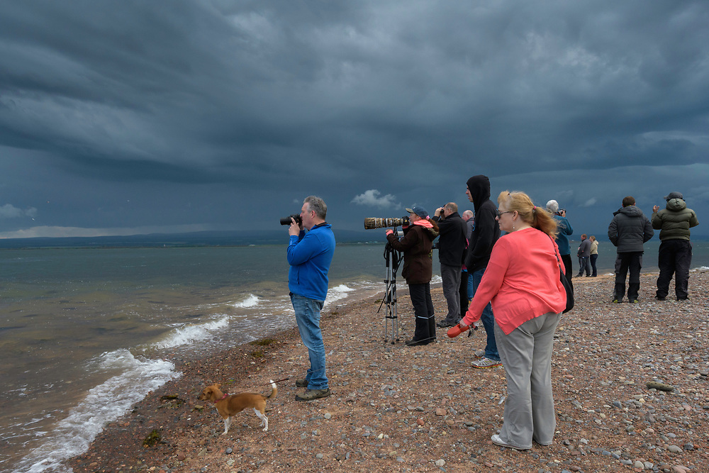 Moray firth, Scotland, UK. People watching Bottlenose dolphins (Tursiops truncatus) at Chanonry Point,