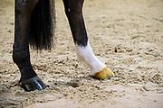 Ben Johnson<br /> Dressuurstal van Baalen 2018<br /> © DigiShots