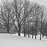 Winter in Michigan!<br /> <br /> Beautiful winter scenes, winter wonderlands, and lone trees in winter!<br /> <br /> Images in color, B&amp;W, and using selective color.<br /> <br /> If you love winter, snow, trees, rolling hills, and lone trees then you'll find a lovely selection!! <br /> <br /> Winter in Michigan by Rachel Cohen