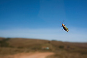 Tapira_MG, Brasil...Parque Nacional Serra da Canastra em Tapira, Minas Gerais. Na foto um inseto...Serra da Canastra National Park in Tapira, Minas Gerais. In this photo a inset...Foto: LEO DRUMOND / NITRO