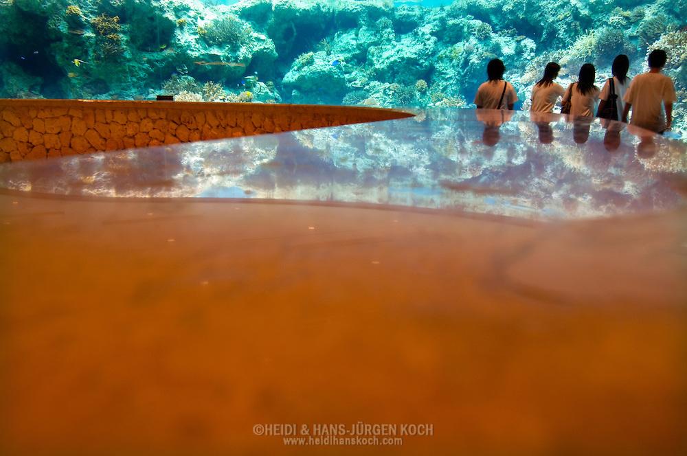 JPN, Japan: Okinawa Churaumi Aquarium, Korallen-Lobby, im Hintergrund ein Korallenriff, Ocean Expa Park, Okinawa, Okinawa | JPN, Japan: Okinawa Churaumi Aquarium, Corals lobby, coral reef in background, Ocean Expo Park, Okinawa, Okinawa |