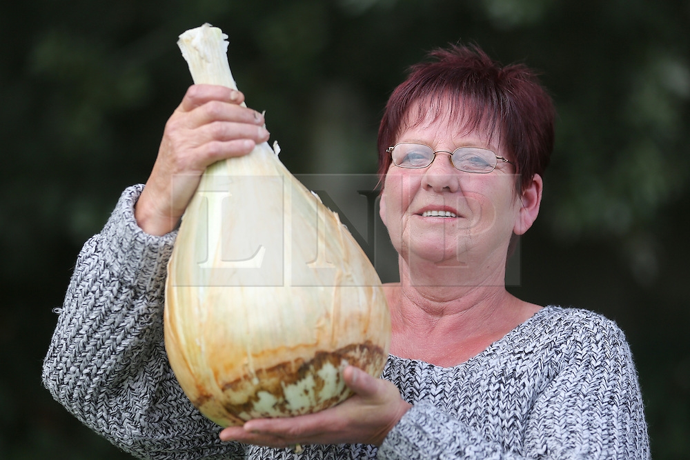 © Licensed to London News Pictures. 18/09/2015. Harrogate, UK. Picture shows Barbara Cook with her first prize winning Onion at the Giant Veg competition at the Harrogate Autumn Flower show. Photo credit: Andrew McCaren/LNP
