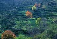 France, Languedoc Roussillon, Gard, Cevennes, vallées de la Dourbie