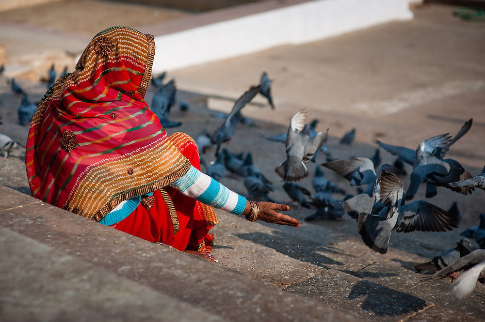 Indian woman in sari feeding the pigeons at Pushkar lake ghats (India)