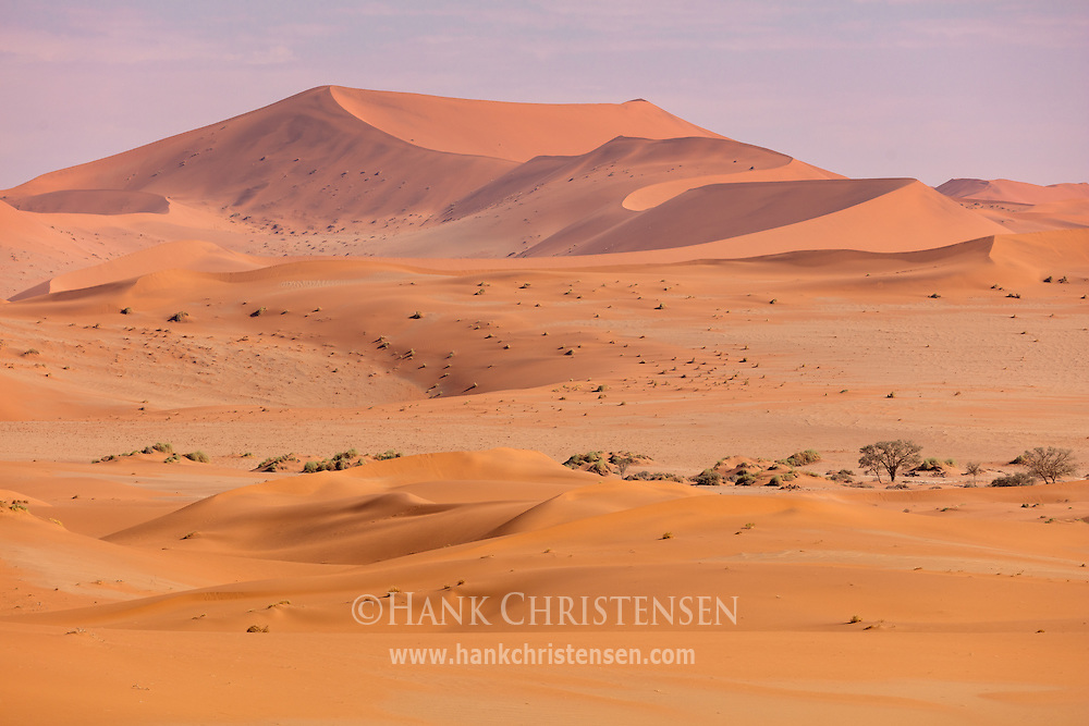 The sand dunes around Sossusvlei reach over 1000 feet tall, the tallest in the world, Namib-Naukluft National Park, Namibia.
