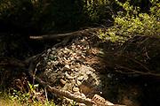 Trash accumulates in a riparian area along the the Santa Cruz River, Tubac, Arizona, USA. The Santa Cruz River is partially fed with reclaimed water.