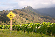 A 'Wildlife Crossing' sign warns people to slow down to avoid hitting the Nene, the Hawaiian State Bird