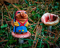 Troll hunting for the elusive red mushrooms. Autumn Backyard Nature in New Jersey. Image taken with a Nikon Df camera and 28 mm f/1.8 lens (ISO 560, 28 mm, f/8, 1/30 sec).