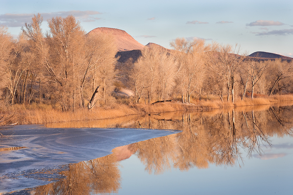 late winter afternoon sun at Pahranagat National Wildlife Refuge, NV..